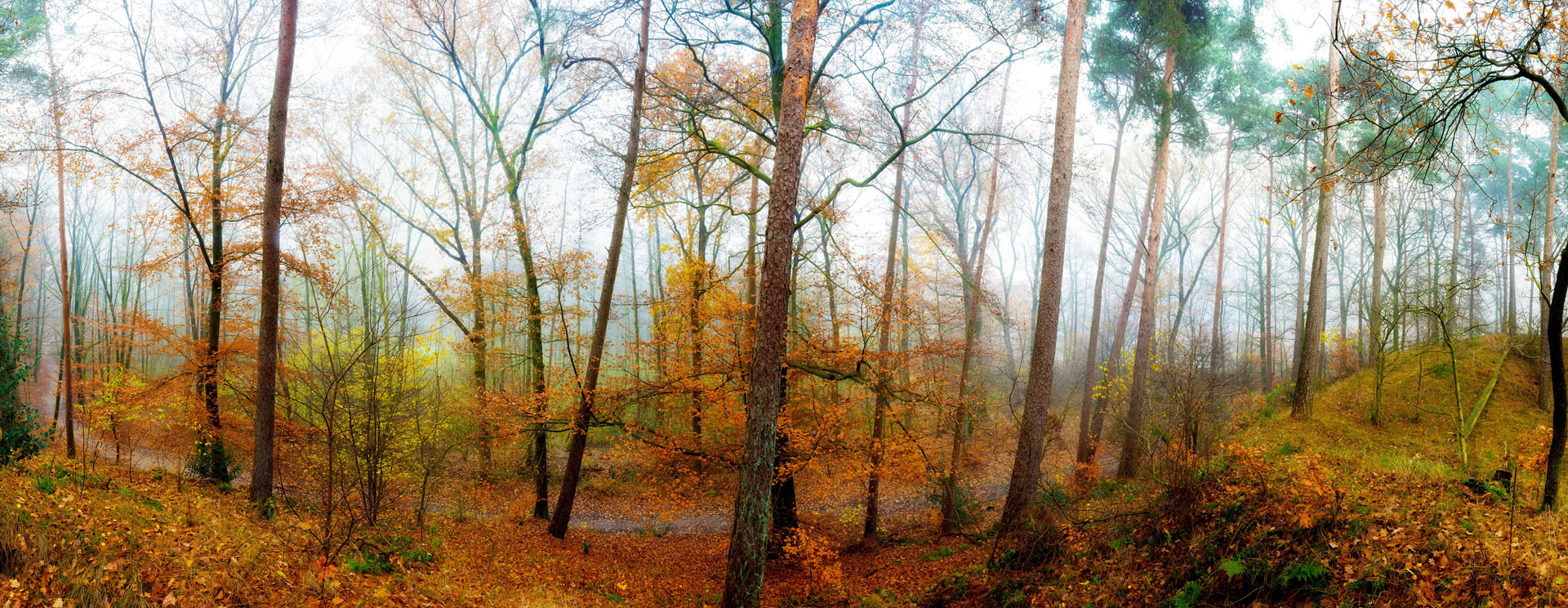 Tapete Waldpanorama Herbst